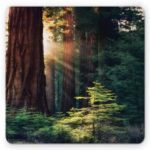 Non Slip Rubber Gaming Comfortabe Forest Sunlight Mouse Pad