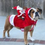 Large Pet Clothes for Christmas
